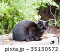 猫 黒猫 野良猫の写真 35130572