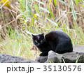 地域猫のクロちゃん 35130576