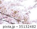 日本の桜 そめいよしの ソメイヨシノ 染井吉野 さくら クローズアップ 接写 コピースペース 35132482