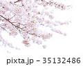 桜 クローズアップ 植物の写真 35132486