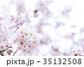 日本の桜 そめいよしの ソメイヨシノ 染井吉野 さくら クローズアップ 接写 コピースペース 35132508