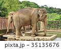 アジアゾウ 象 動物の写真 35135676