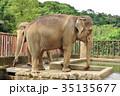 アジアゾウ 象 動物の写真 35135677