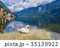 湖 白鳥 ハルシュタット湖の写真 35139922