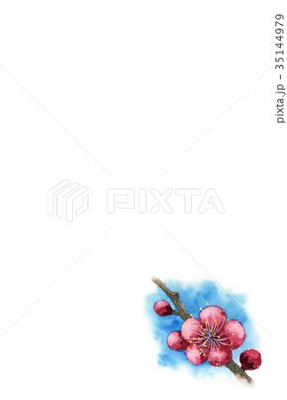 紅梅の年賀ハガキ素材 35144979