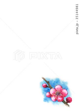 紅梅の年賀ハガキ素材 35144981