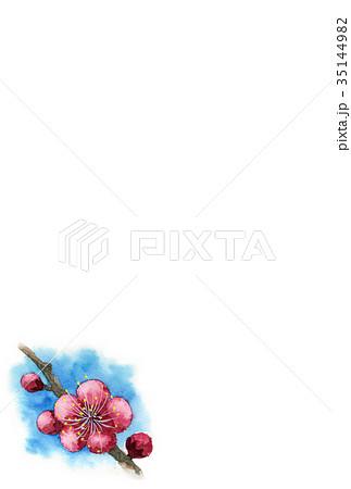 紅梅の年賀ハガキ素材 35144982