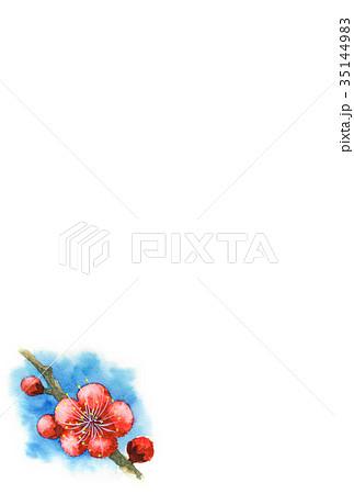 紅梅の年賀ハガキ素材 35144983