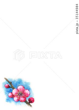 紅梅の年賀ハガキ素材 35144984