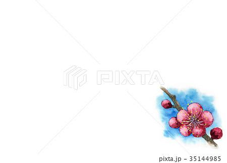 紅梅の年賀ハガキ素材 35144985