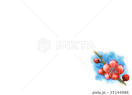 紅梅の年賀ハガキ素材 35144986