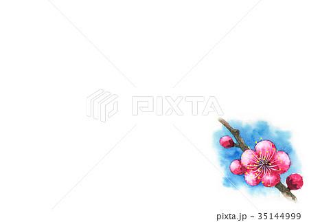 紅梅の年賀ハガキ素材 35144999