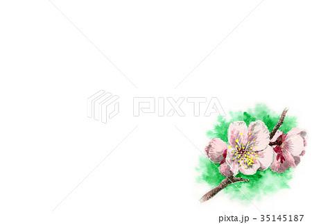 白梅の年賀ハガキ素材 35145187