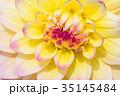 花 お花 フラワーの写真 35145484
