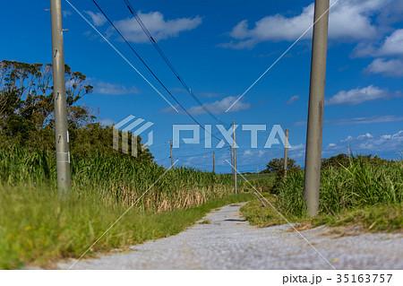種子島 さとうきび畑の風景 35163757