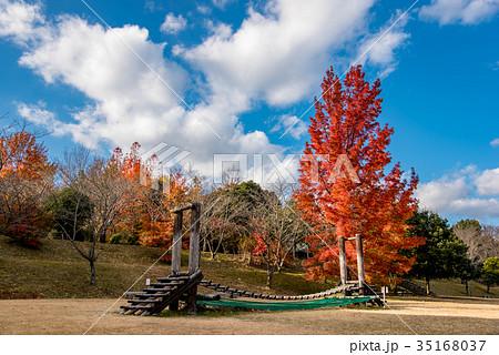 三重県民の森 赤いフウの木と遊具 35168037