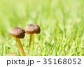 秋 茸 植物の写真 35168052