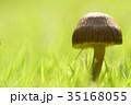 秋 茸 植物の写真 35168055