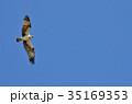鳥 飛ぶ ミサゴの写真 35169353