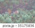 山頂のノゴマ 35175836
