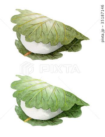 葉の色違いの柏餅2個 35187146