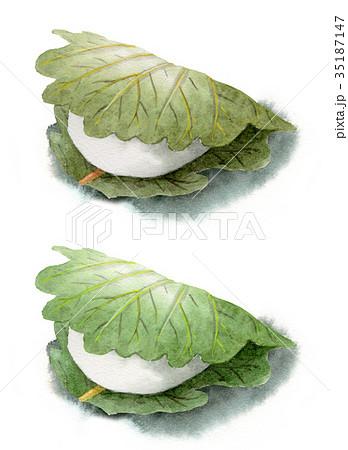 葉の色違いの柏餅2個 35187147