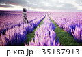 Military robot, cyborg with gun in lavender field 35187913