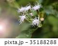 フラワー 花 庭の写真 35188288