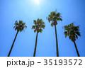 椰子 椰子の木 夏の写真 35193572