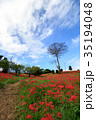 彼岸花 ヒガンバナ 青空の写真 35194048