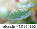 緑 水 葉の写真 35194892