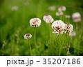 花 クローズアップ 植物の写真 35207186
