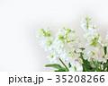 白い花 ストック 35208266