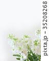 白い花 ストック 35208268