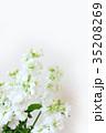 白い花 ストック 35208269