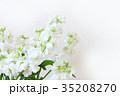 白い花 ストック 35208270