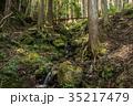 渓流 川 自然の写真 35217479