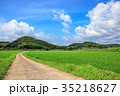 水田 田んぼ 田舎道の写真 35218627