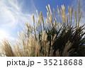 パンパスグラス 植物 秋の写真 35218688
