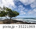 ミロリイビーチ 海 海岸の写真 35221969