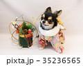 お正月と犬 35236565