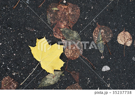 Nice autumn leaves on wet asphalt, bright natural 35237738
