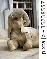 アフリカゾウ 35238557