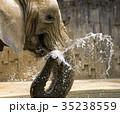 アフリカゾウ 35238559