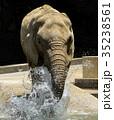 アフリカゾウ 35238561