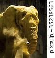 アフリカゾウ 35238563