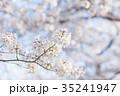桜 サクラ 春の写真 35241947