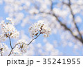 桜 サクラ 春の写真 35241955