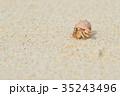 白砂ビーチのオカヤドカリ 35243496
