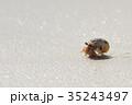 オカヤドカリ ヤドカリ 甲殻類の写真 35243497